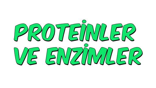 Proteinler ve Enzimler