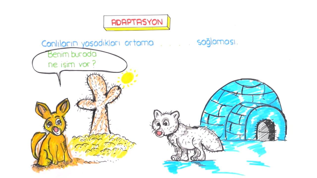 DNA ve Genetik Kod konusu Adaptasyon, Doğal Seçilim, Varyasyon eğitimi