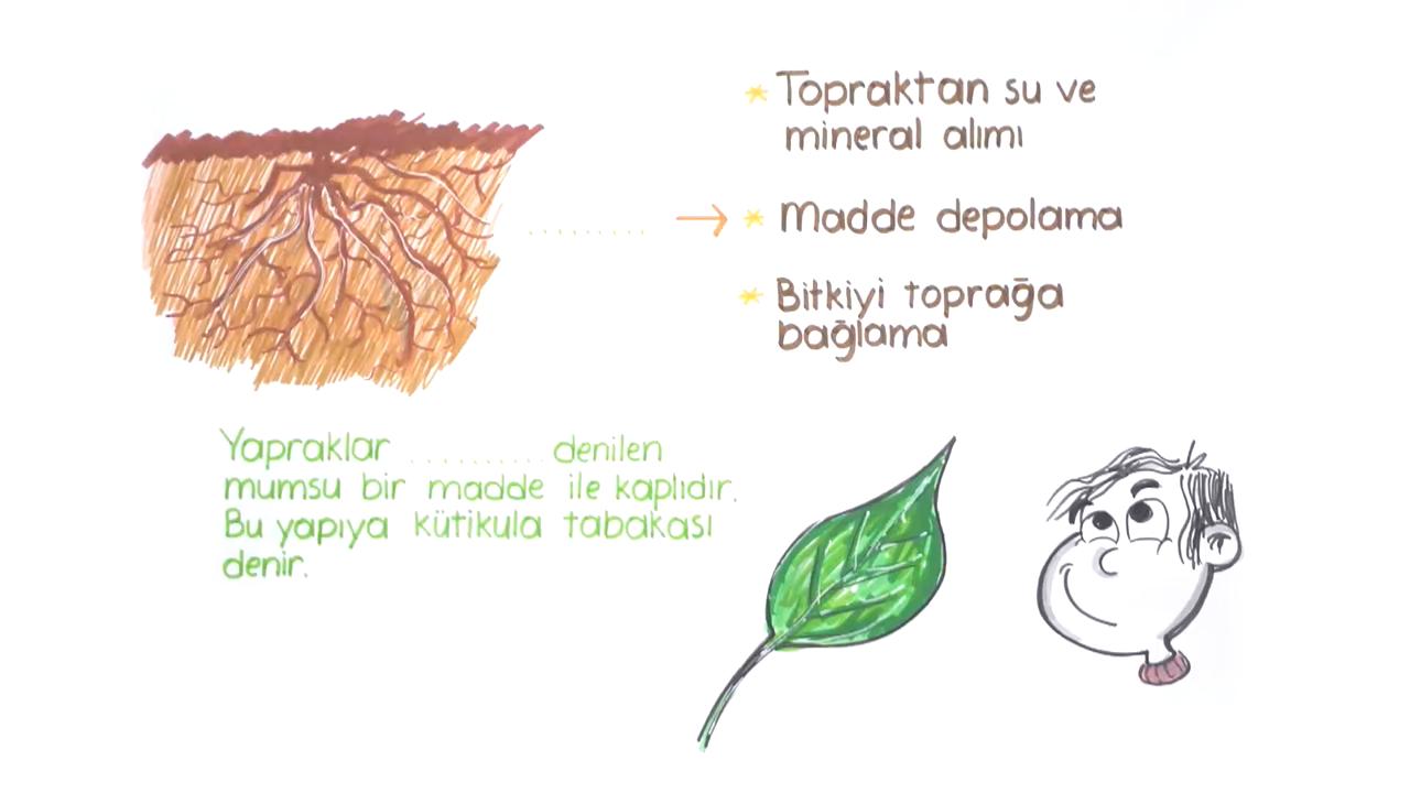 Bitkiler Alemi konusu Bitkiler Alemi - 1  eğitimi