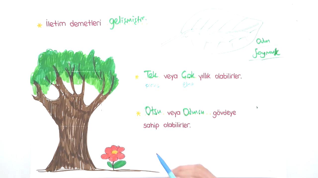 Bitkiler Alemi konusu Bitkiler Alemi - 2 eğitimi