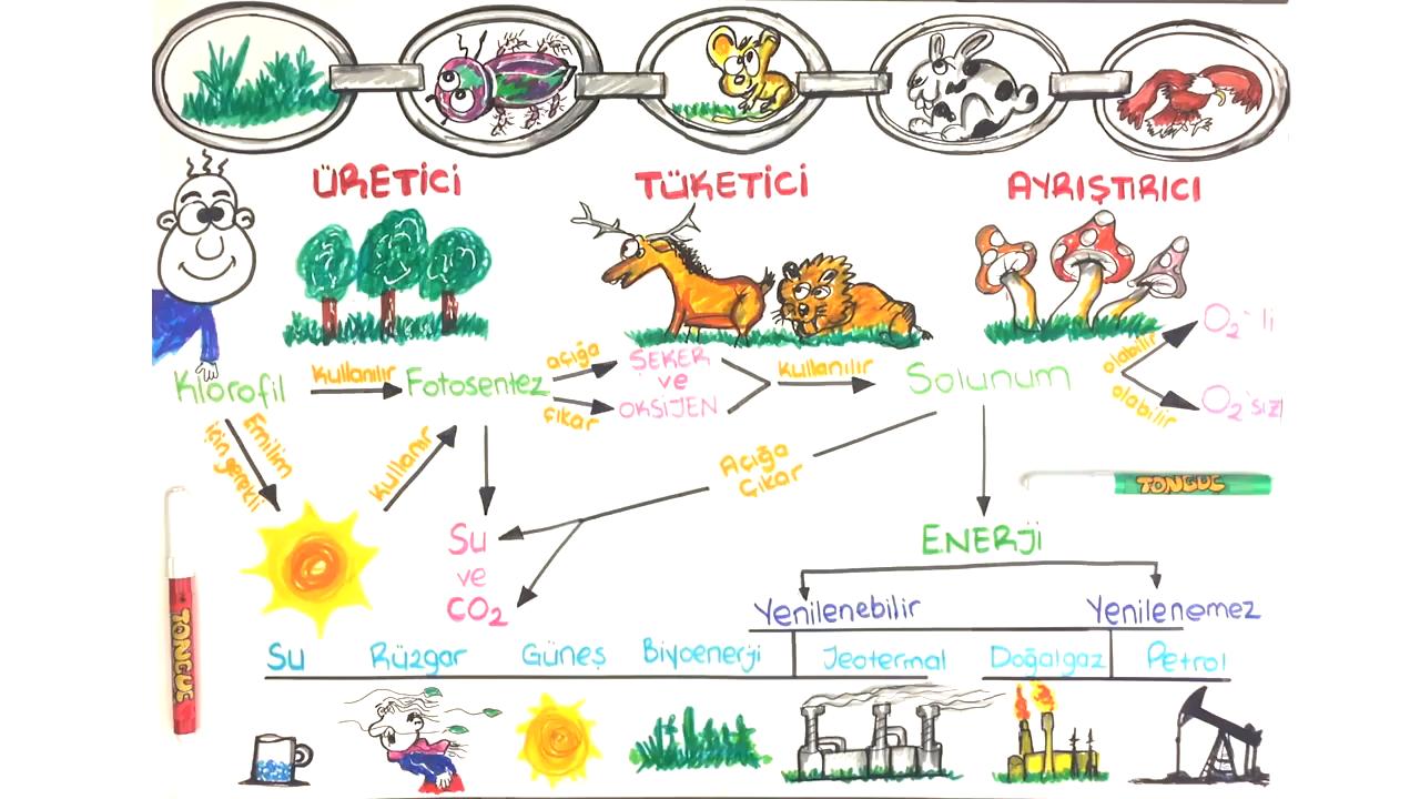 Canlılar ve Enerji İlişkileri Ünite Özeti konusu Canlılar ve Enerji İlişkileri (Ünite Özet) eğitimi