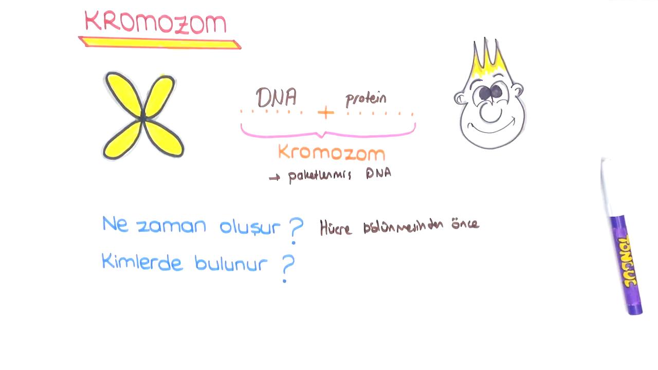 DNA ve Genetik Kod konusu DNA ve Genetik Kod  eğitimi