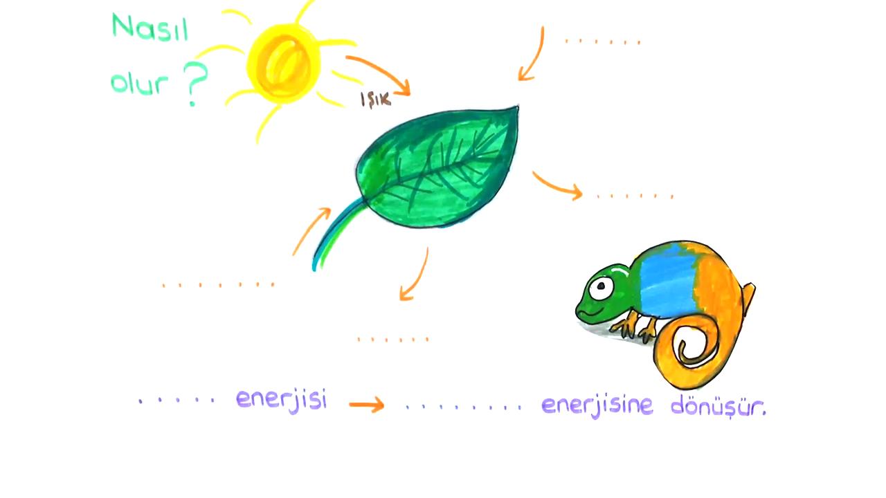 Besin Zincirindeki Canlılar konusu Fotosentez  eğitimi