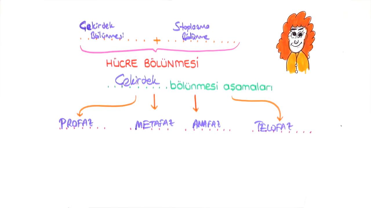 Mitoz ve Mayoz konusu Hücre Bölünmesi  eğitimi