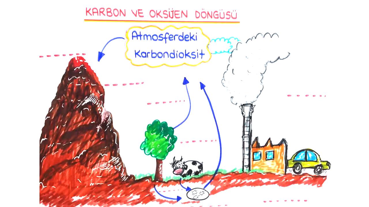Madde Döngüleri konusu Karbon ve Oksijen Döngüsü  eğitimi