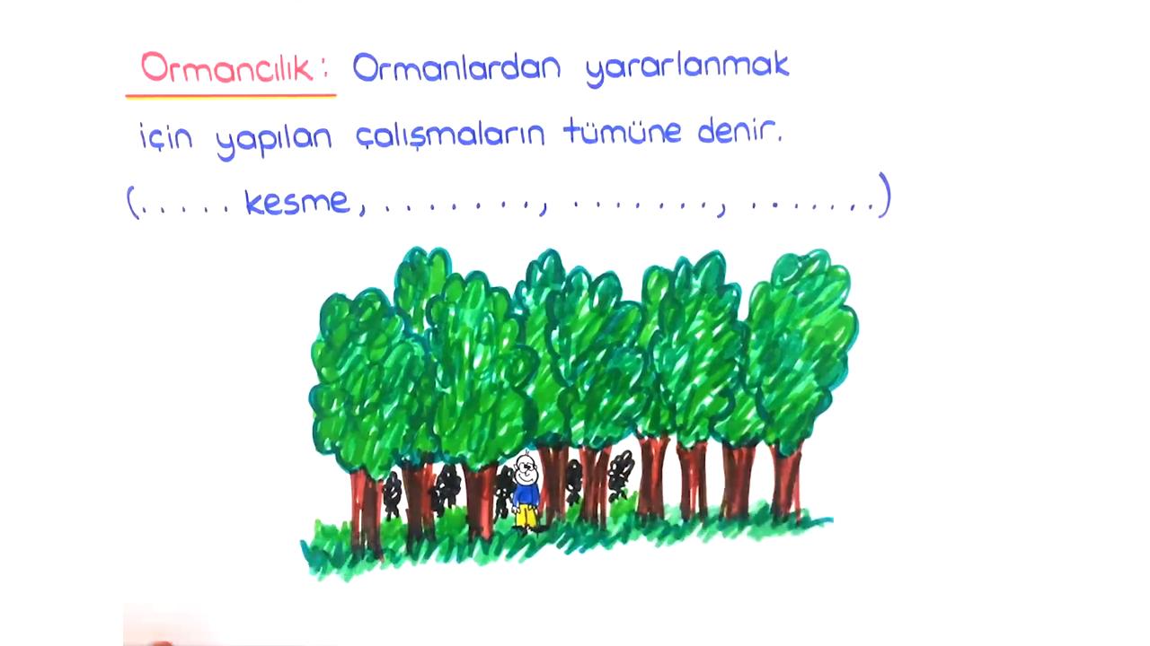 Doğal Kaynaklar ve Ekonomi konusu Ormanlarımız  eğitimi