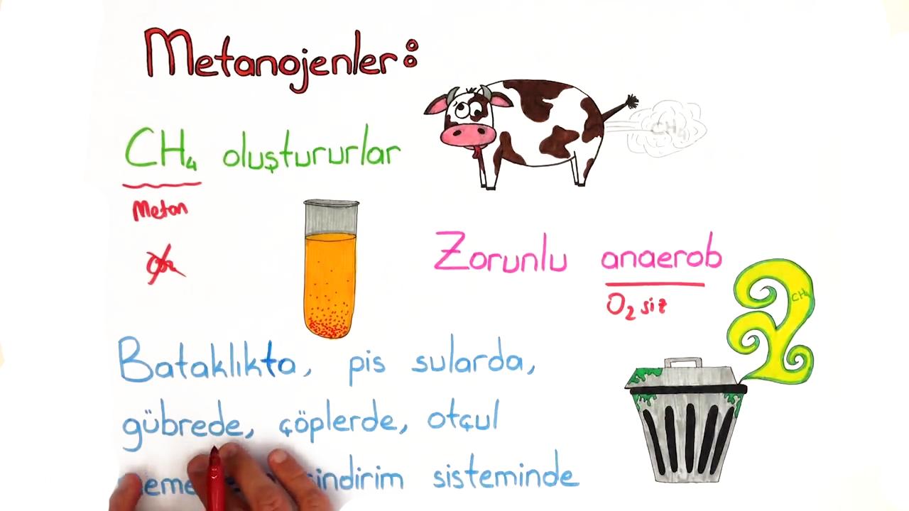 Arkebakteriler Alemi konusu Arkeler  eğitimi