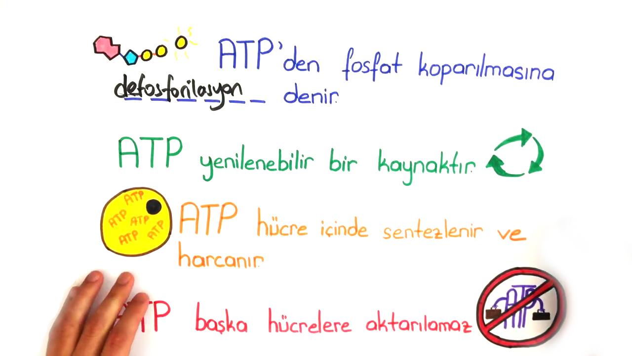 Nükleik Asitler ve ATP konusu ATP eğitimi