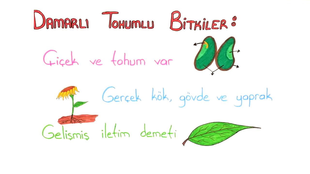 Bitkiler Alemi konusu Bitkiler Alemi - 3 eğitimi