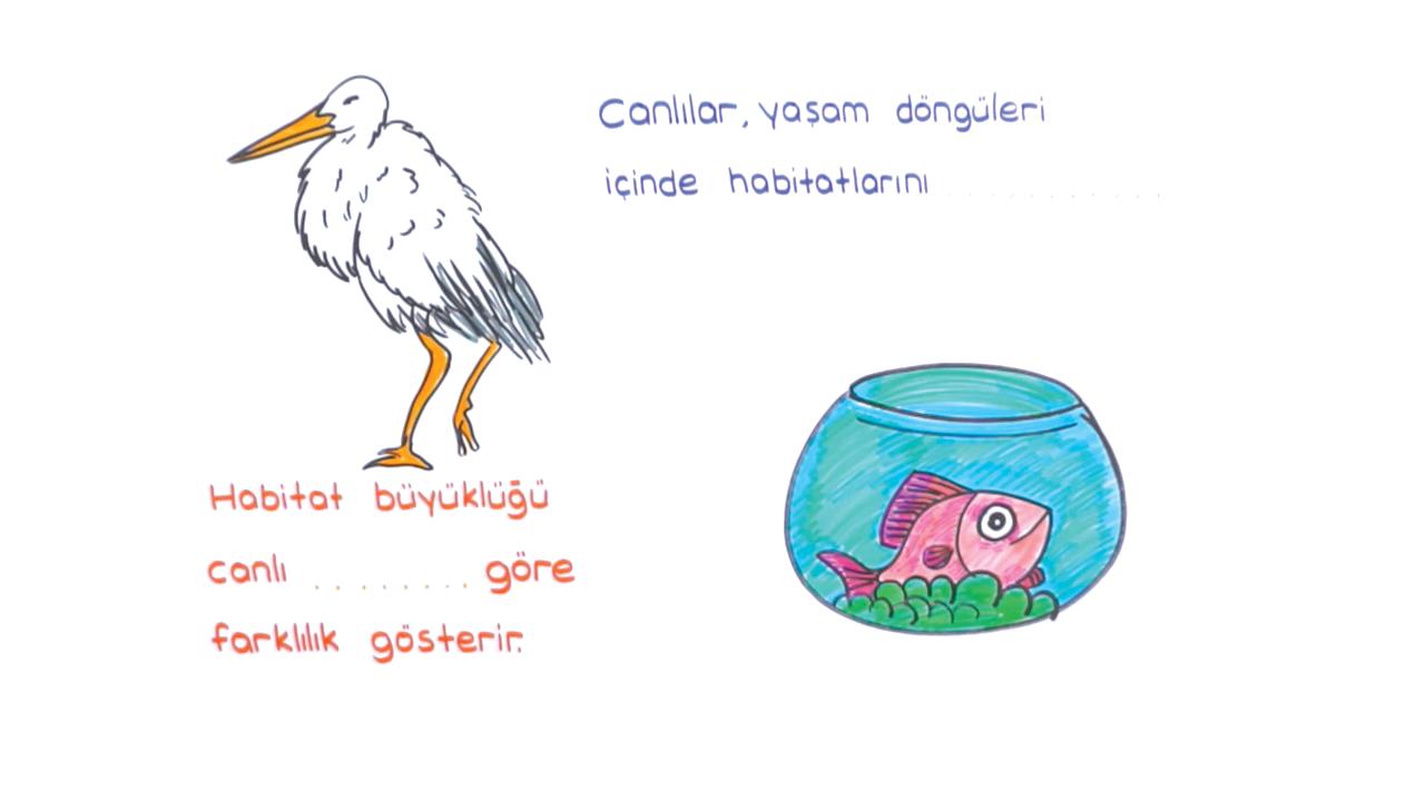 Ekosistem Ekolojisi konusu Ekolojik Kavramlar 2 eğitimi