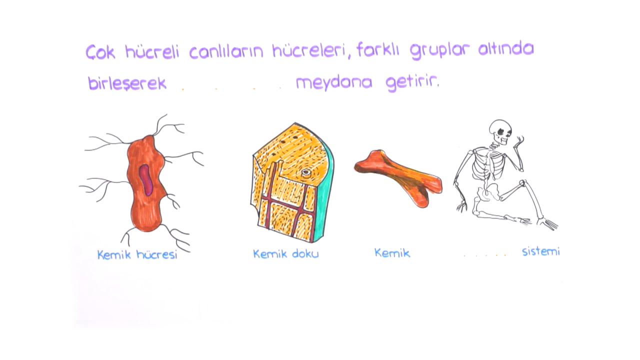 Hücre konusu Hücre Yapısı ile İlgili Görüşler eğitimi
