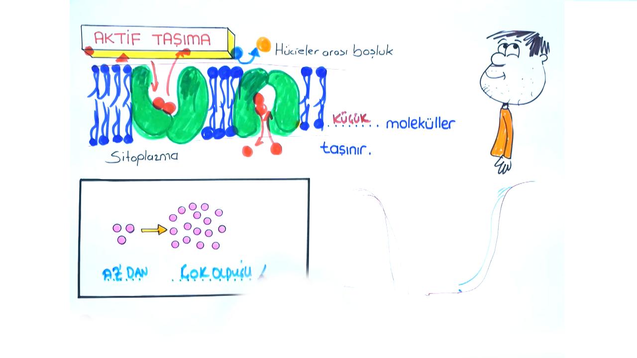 Hücre Zarı konusu Hücre Zarından Madde Geçişleri III eğitimi