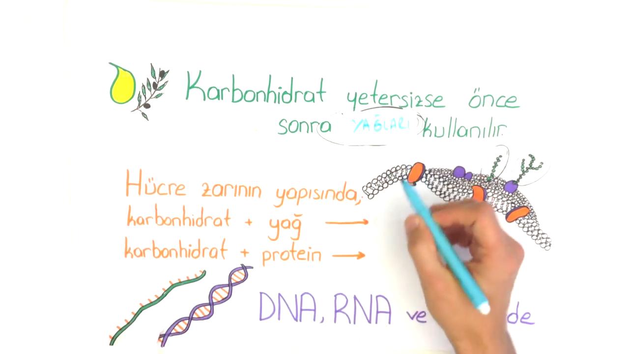 Karbonhidratlar konusu Karbonhidratların Önemi eğitimi