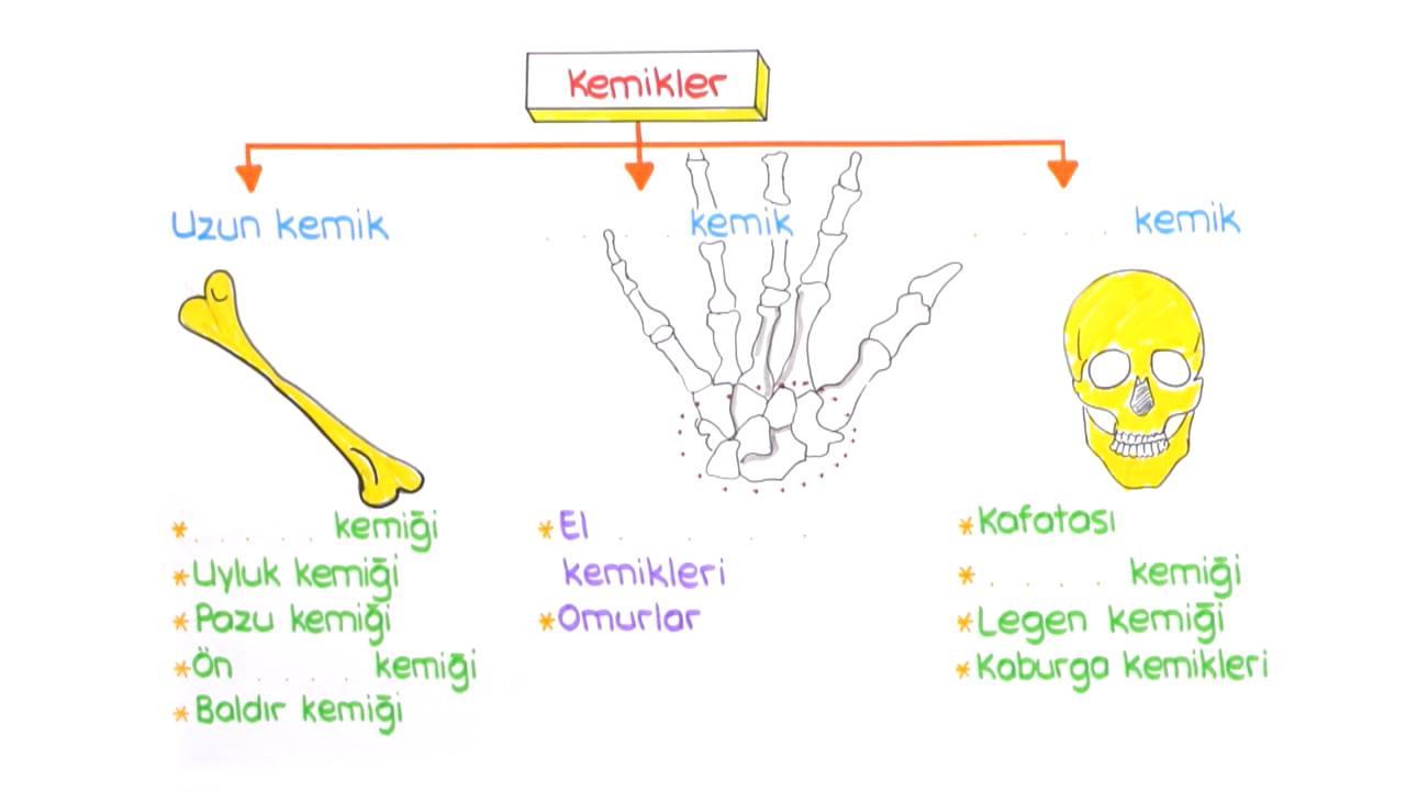 Destek ve Hareket Sistemi konusu Kemikler - Eklemler eğitimi