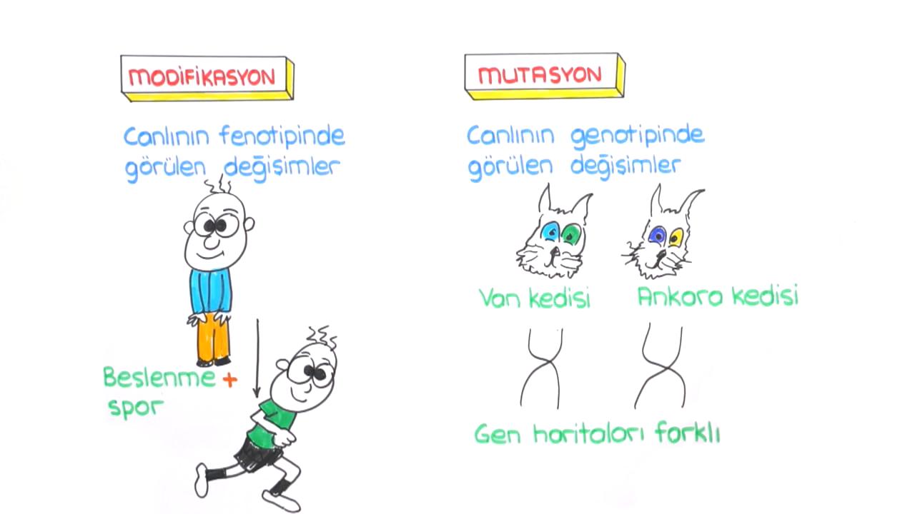 DNA ve Genetik Kod konusu Mutasyon, Modifikasyon Farkları eğitimi