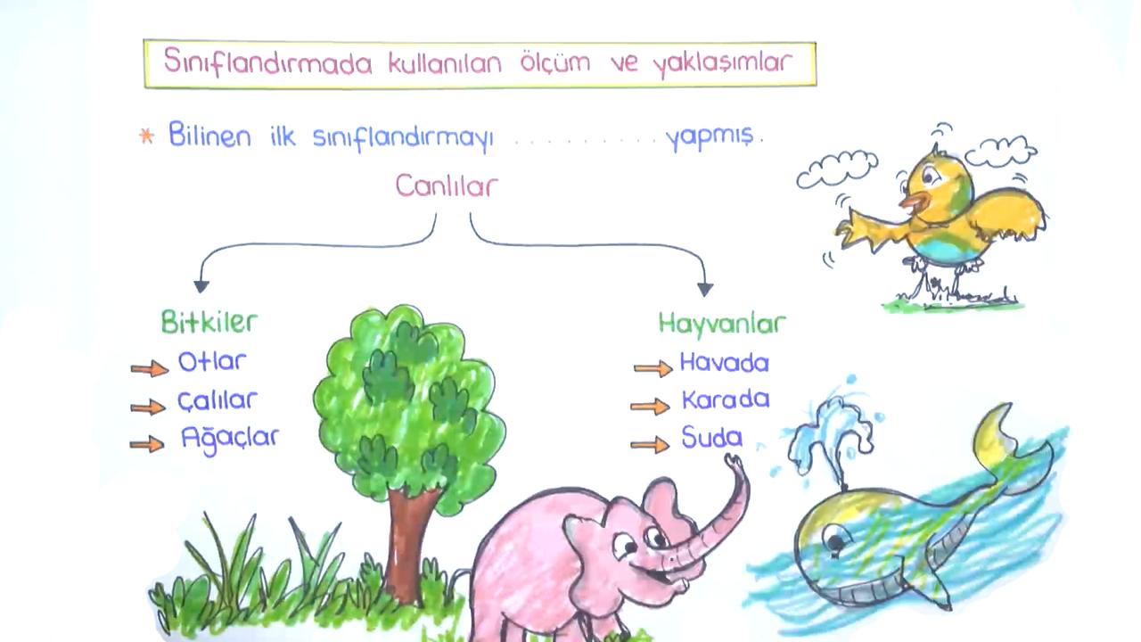 Canlıların Çeşitliliği ve Sınıflandırılması konusu Sınıflandırmanın Amacı ve Faydaları eğitimi