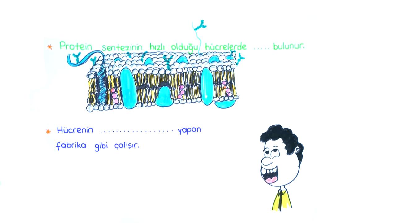 Sitoplazma ve Çekirdek konusu Sitoplazma ve Organeller II eğitimi