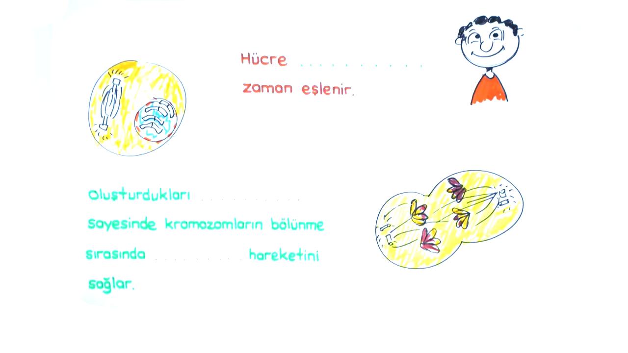 Sitoplazma ve Çekirdek konusu Sitoplazma ve Organeller V eğitimi