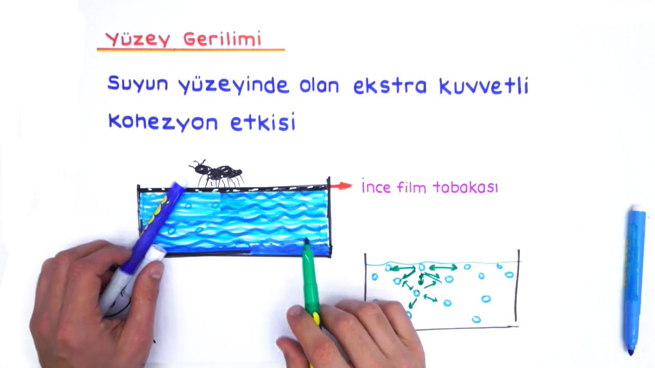 İnorganik Bileşikler konusu Su eğitimi