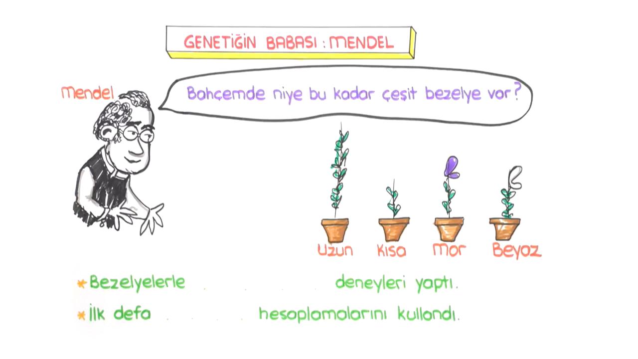 DNA ve Genetik Kod konusu Tek Karakter Çaprazlaması ve Cinsiyetin Belirlenmesi eğitimi